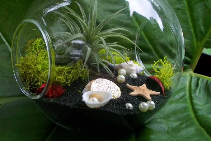 Succulent sea-themed terrarium