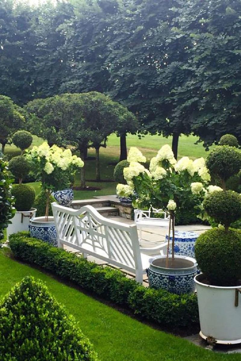 Hydrangea trees