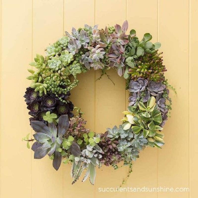 Beautiful succulent wreath